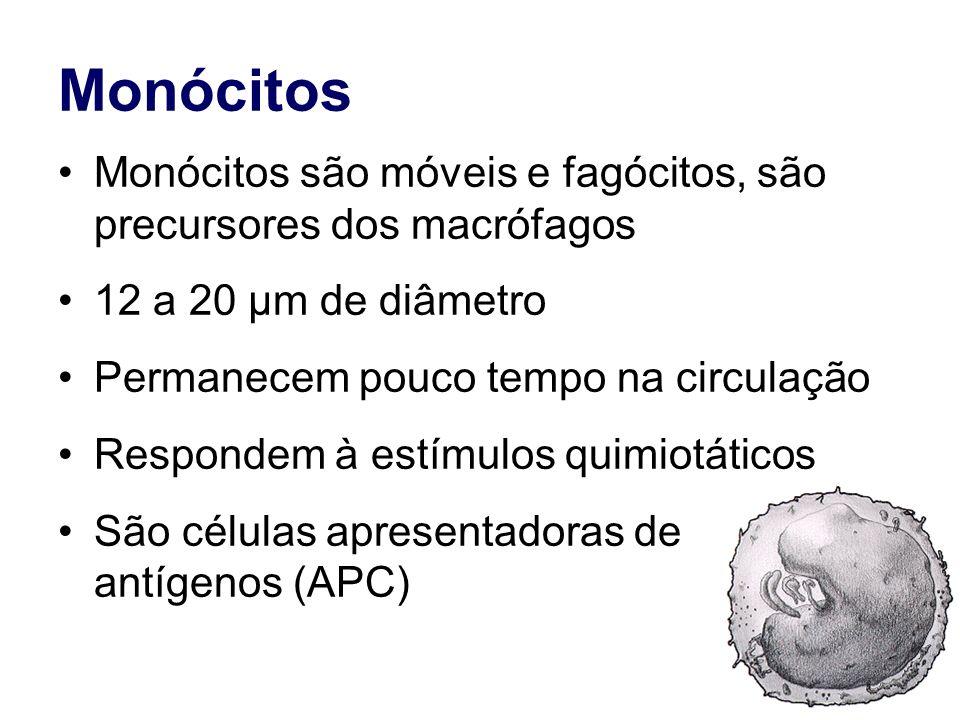 Monócitos Monócitos são móveis e fagócitos, são precursores dos macrófagos. 12 a 20 µm de diâmetro.