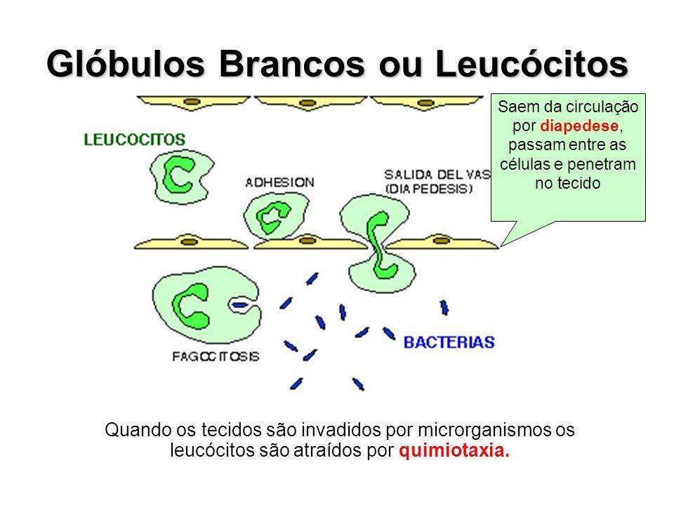 Glóbulos Brancos ou Leucócitos