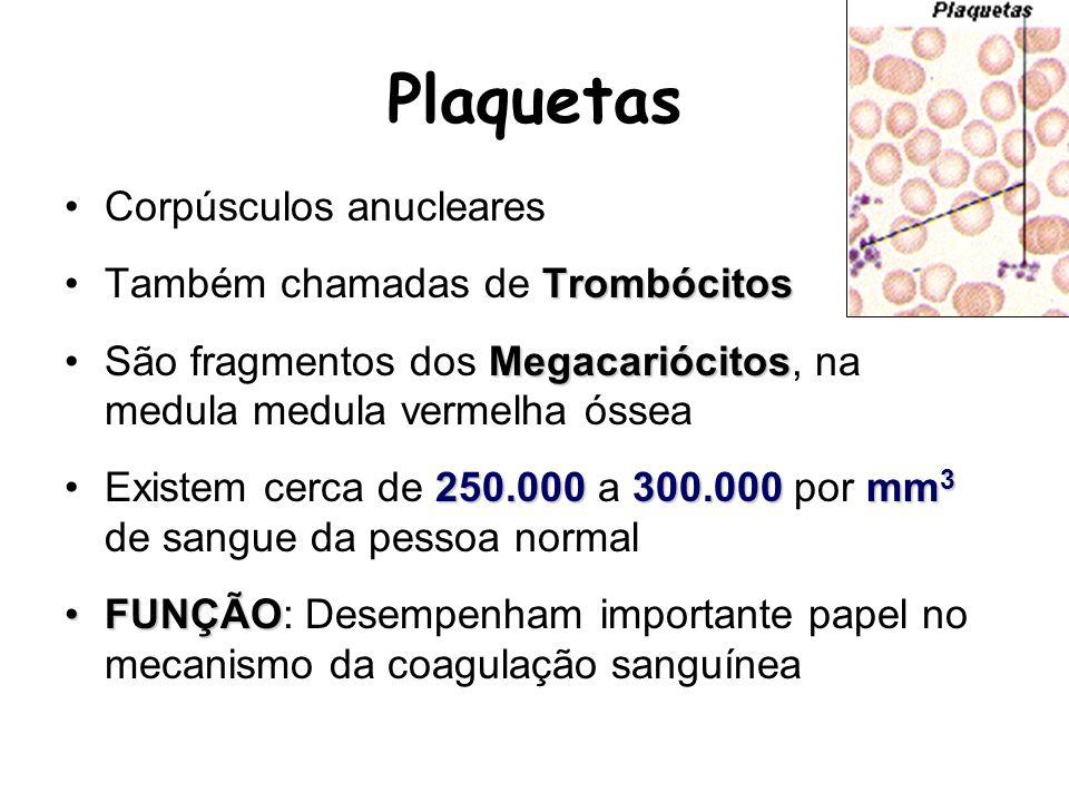 Plaquetas Corpúsculos anucleares Também chamadas de Trombócitos
