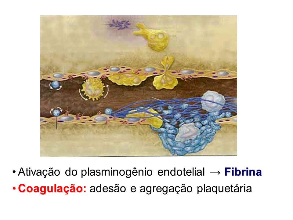 Ativação do plasminogênio endotelial → Fibrina