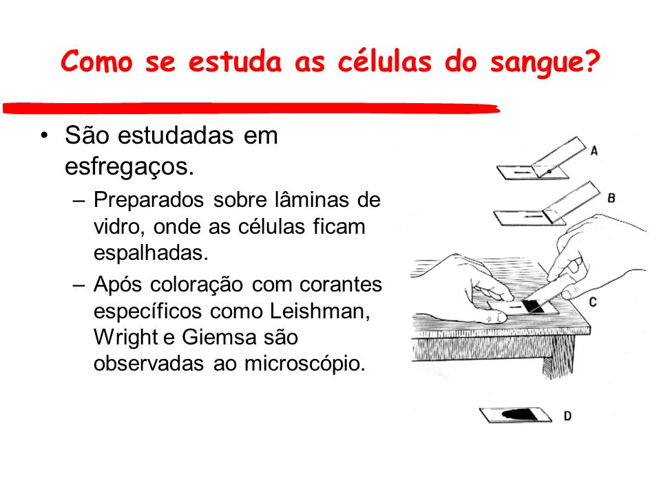 Como se estuda as células do sangue