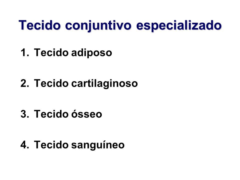 Tecido conjuntivo especializado