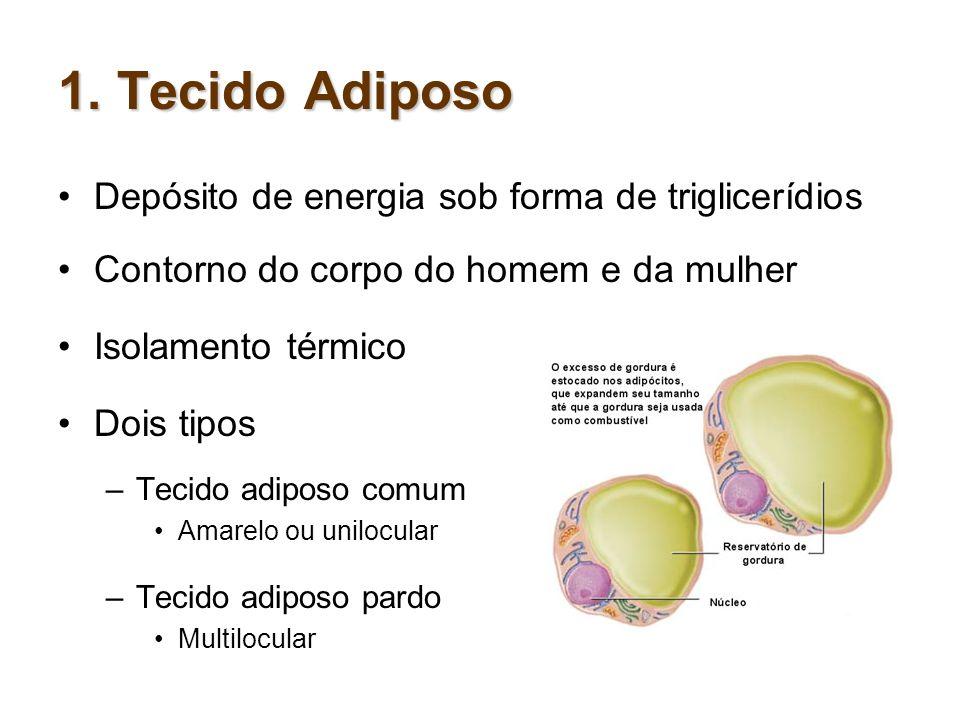 1. Tecido Adiposo Depósito de energia sob forma de triglicerídios