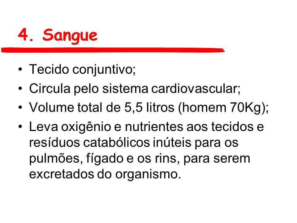 4. Sangue Tecido conjuntivo; Circula pelo sistema cardiovascular;
