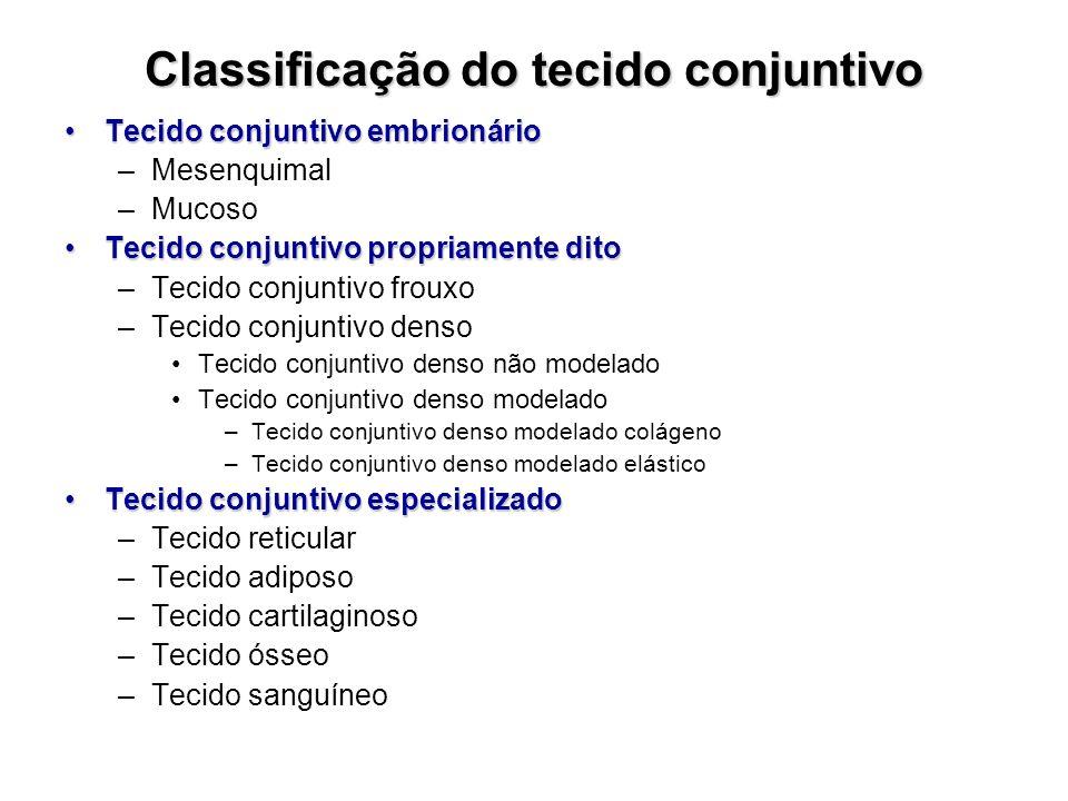 Classificação do tecido conjuntivo