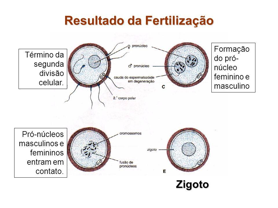 Resultado da Fertilização