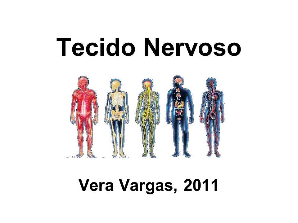 Tecido Nervoso Vera Vargas, 2011