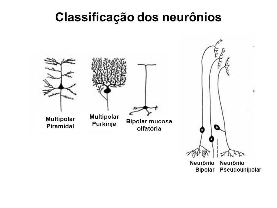 Classificação dos neurônios