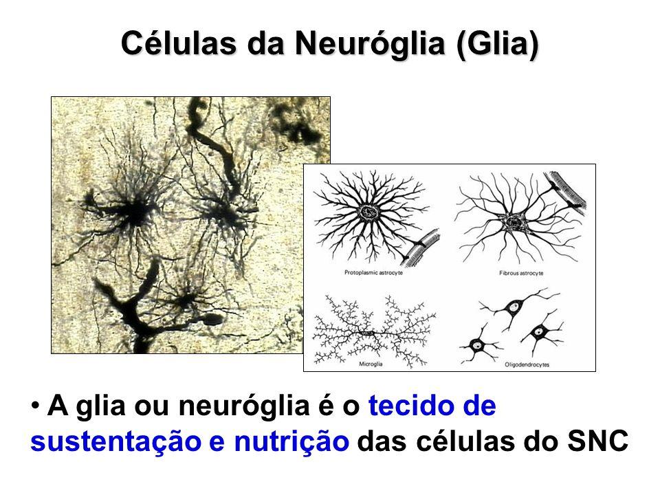 Células da Neuróglia (Glia)