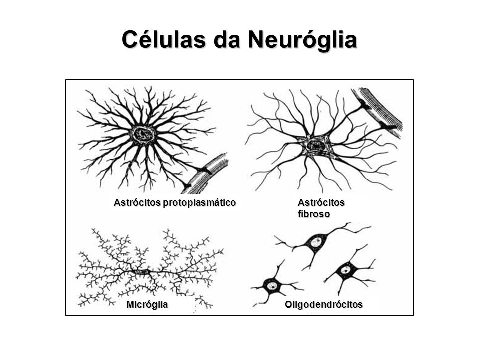 Células da Neuróglia Astrócitos protoplasmático Astrócitos fibroso