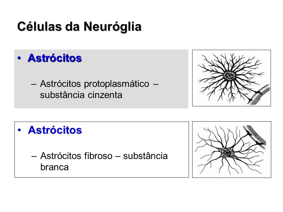 Células da Neuróglia Astrócitos Astrócitos