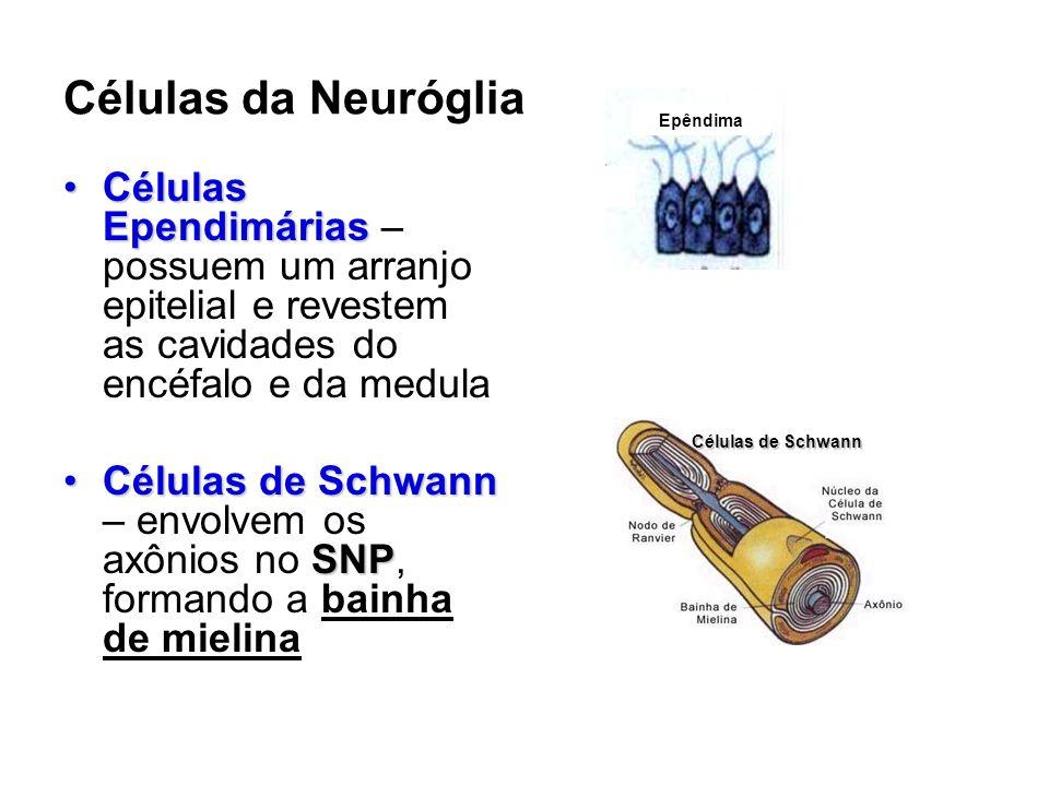 Células da Neuróglia Epêndima. Células Ependimárias –possuem um arranjo epitelial e revestem as cavidades do encéfalo e da medula.
