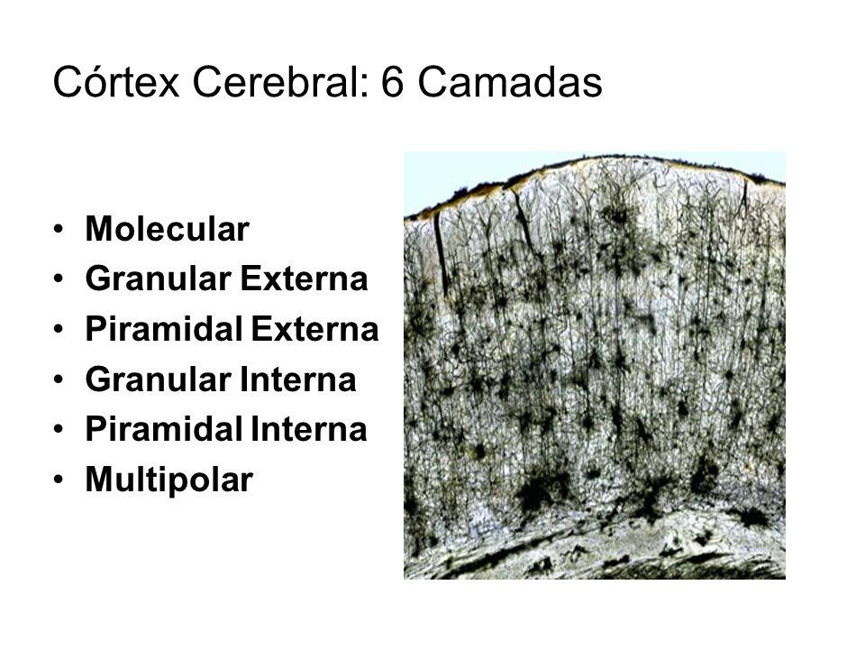 Córtex Cerebral: 6 Camadas