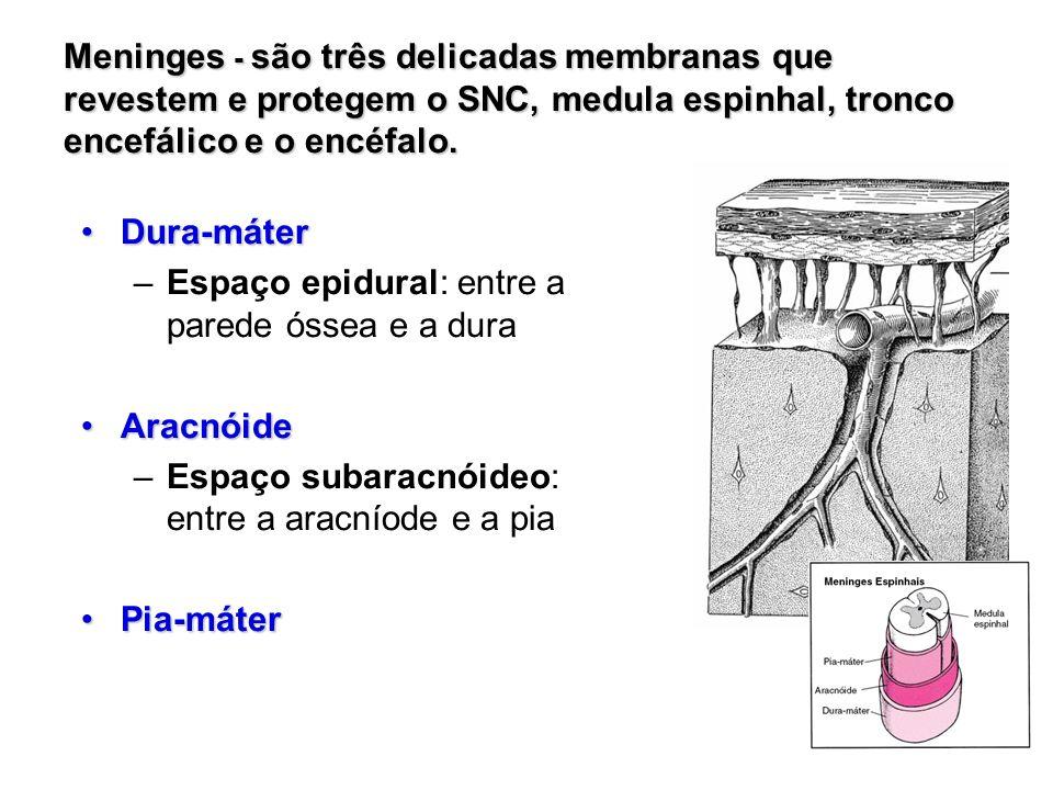 Meninges - são três delicadas membranas que revestem e protegem o SNC, medula espinhal, tronco encefálico e o encéfalo.