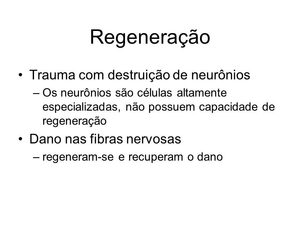 Regeneração Trauma com destruição de neurônios