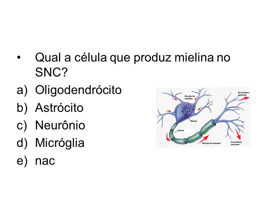 Qual a célula que produz mielina no SNC