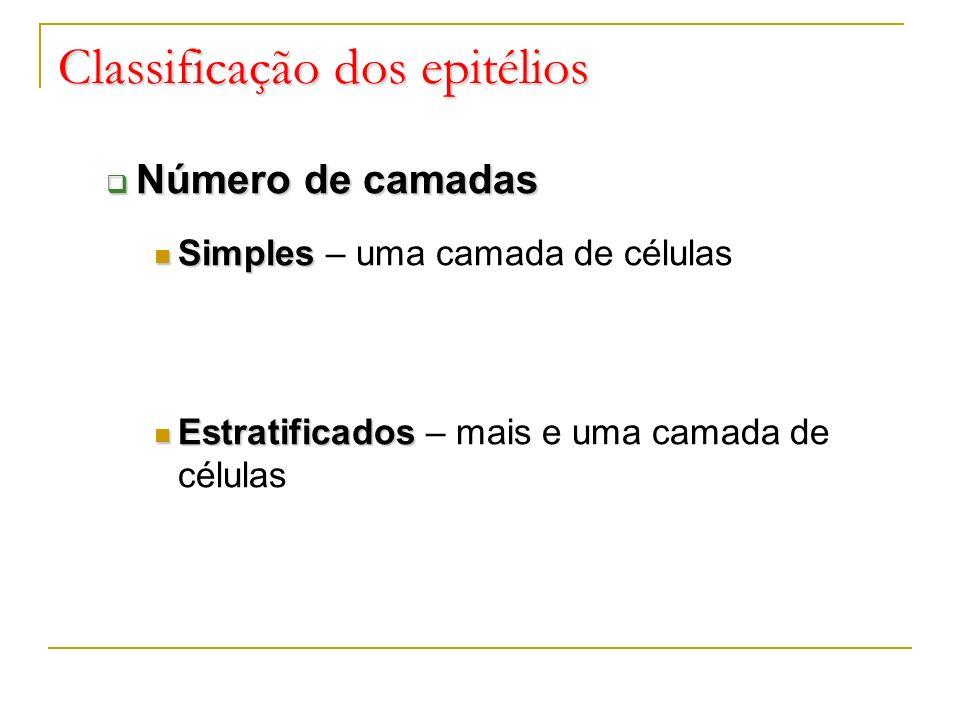 Classificação dos epitélios