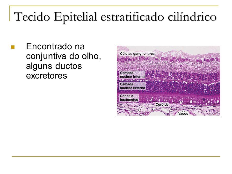 Tecido Epitelial estratificado cilíndrico