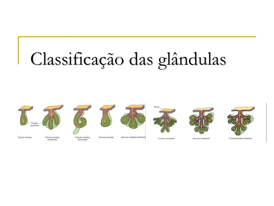Classificação das glândulas