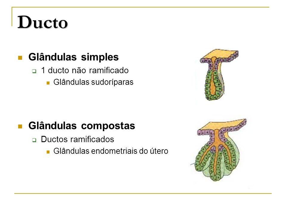 Ducto Glândulas simples Glândulas compostas 1 ducto não ramificado