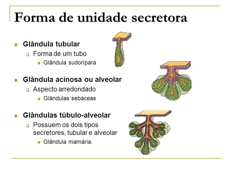 Forma de unidade secretora