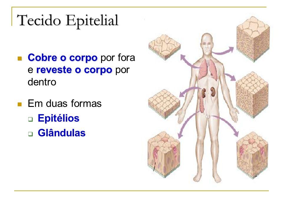 Tecido Epitelial Cobre o corpo por fora e reveste o corpo por dentro