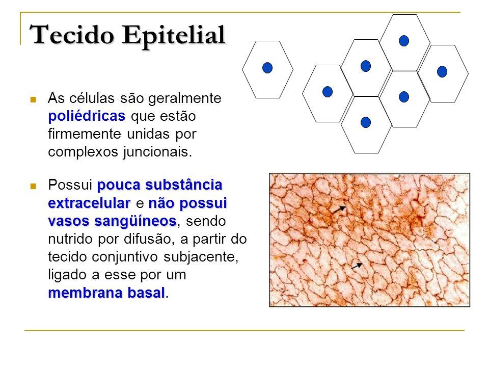 Tecido EpitelialAs células são geralmente poliédricas que estão firmemente unidas por complexos juncionais.