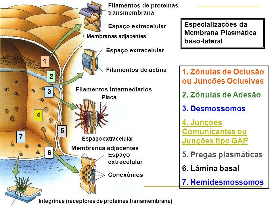 1. Zônulas de Oclusâo ou Juncões Oclusivas 2. Zônulas de Adesão