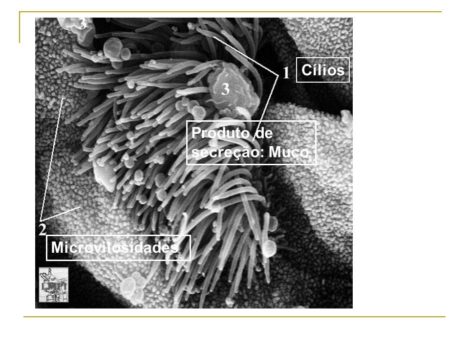 Cílios Produto de secreção: Muco Microvilosidades