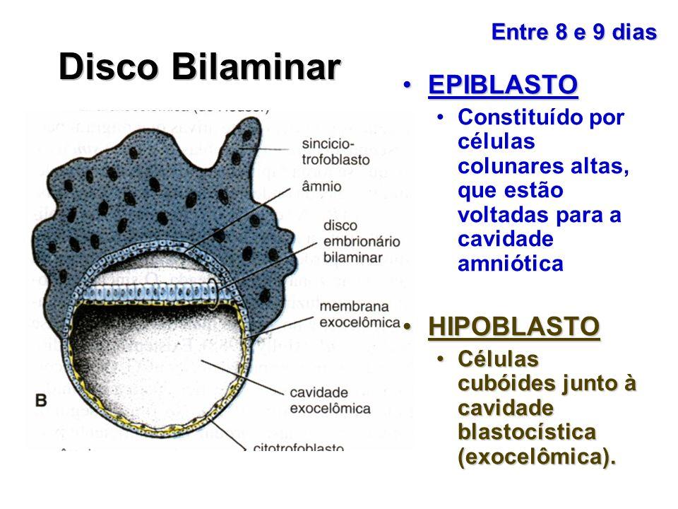 Disco Bilaminar EPIBLASTO HIPOBLASTO Entre 8 e 9 dias