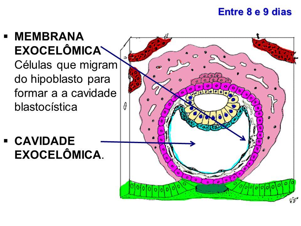 Entre 8 e 9 dias MEMBRANA EXOCELÔMICA Células que migram do hipoblasto para formar a a cavidade blastocística.