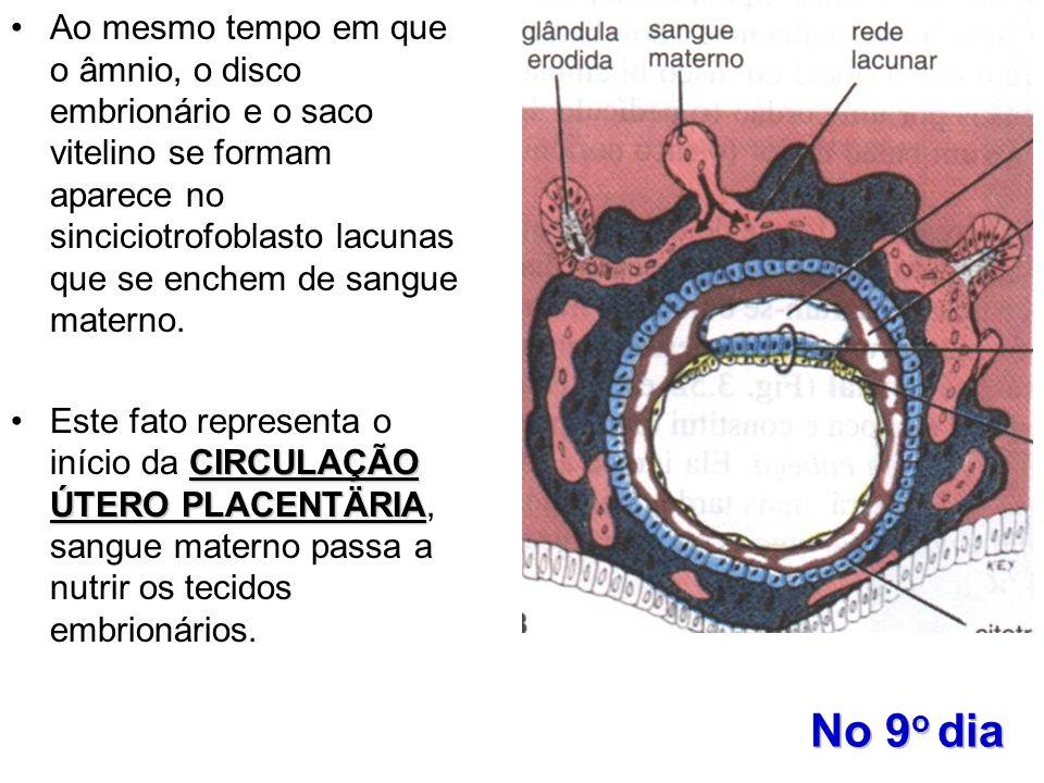 Ao mesmo tempo em que o âmnio, o disco embrionário e o saco vitelino se formam aparece no sinciciotrofoblasto lacunas que se enchem de sangue materno.