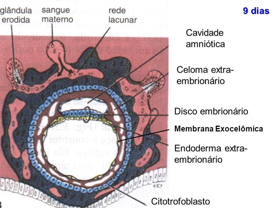 Celoma extra- embrionário