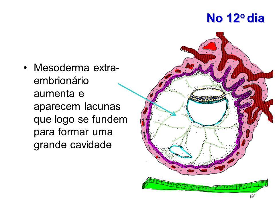 No 12o diaMesoderma extra- embrionário aumenta e aparecem lacunas que logo se fundem para formar uma grande cavidade.
