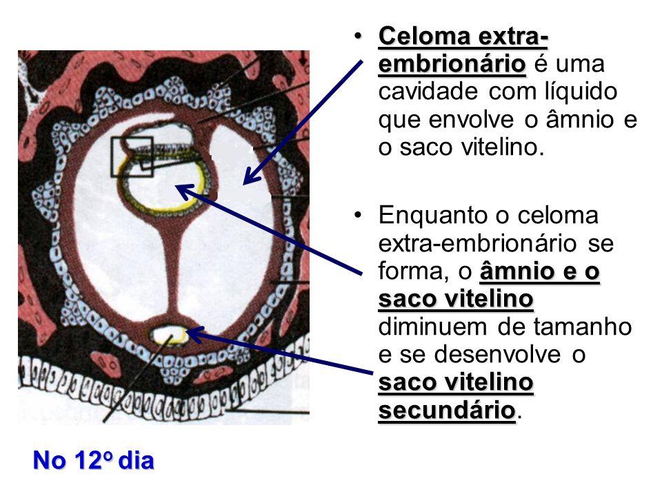 Celoma extra- embrionário é uma cavidade com líquido que envolve o âmnio e o saco vitelino.