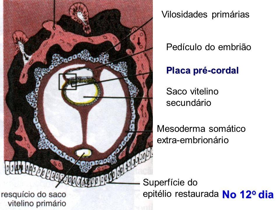 No 12o dia Vilosidades primárias Pedículo do embrião Placa pré-cordal