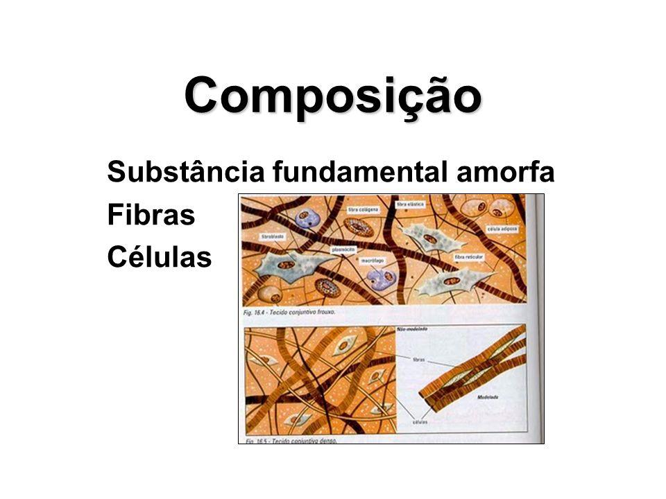 Substância fundamental amorfa Fibras Células