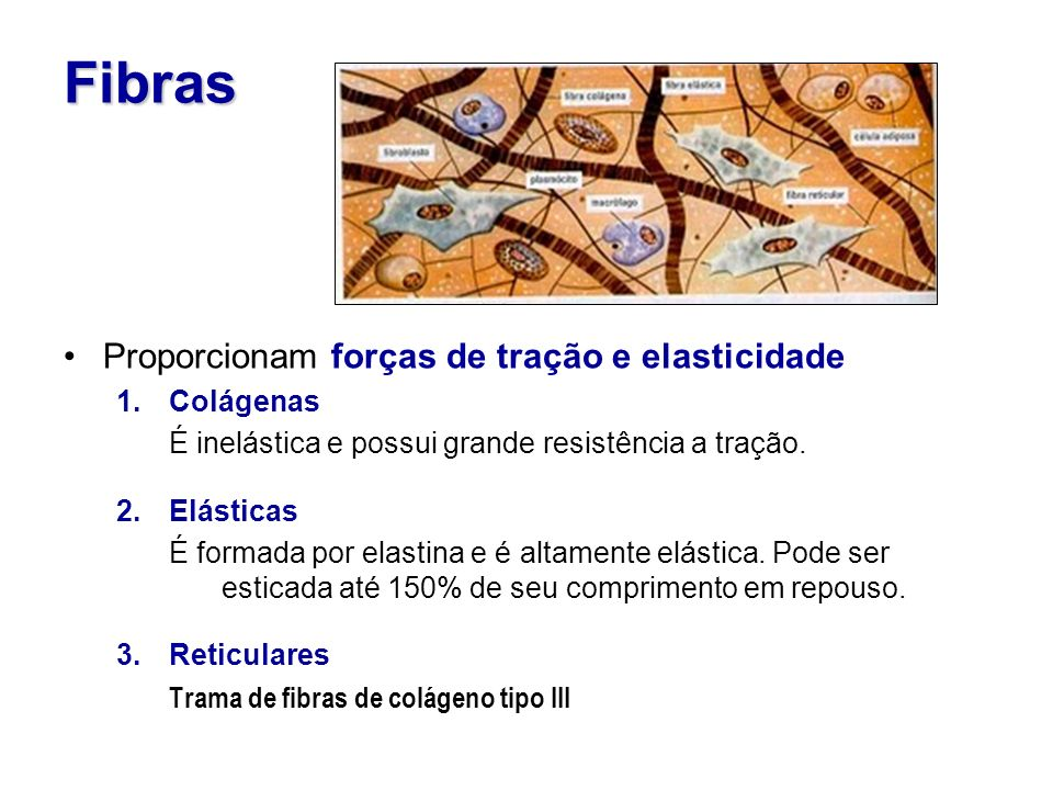 Fibras Proporcionam forças de tração e elasticidade Colágenas