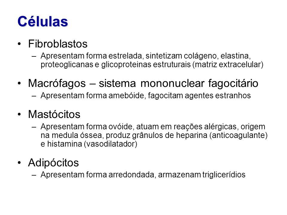 Células Fibroblastos Macrófagos – sistema mononuclear fagocitário
