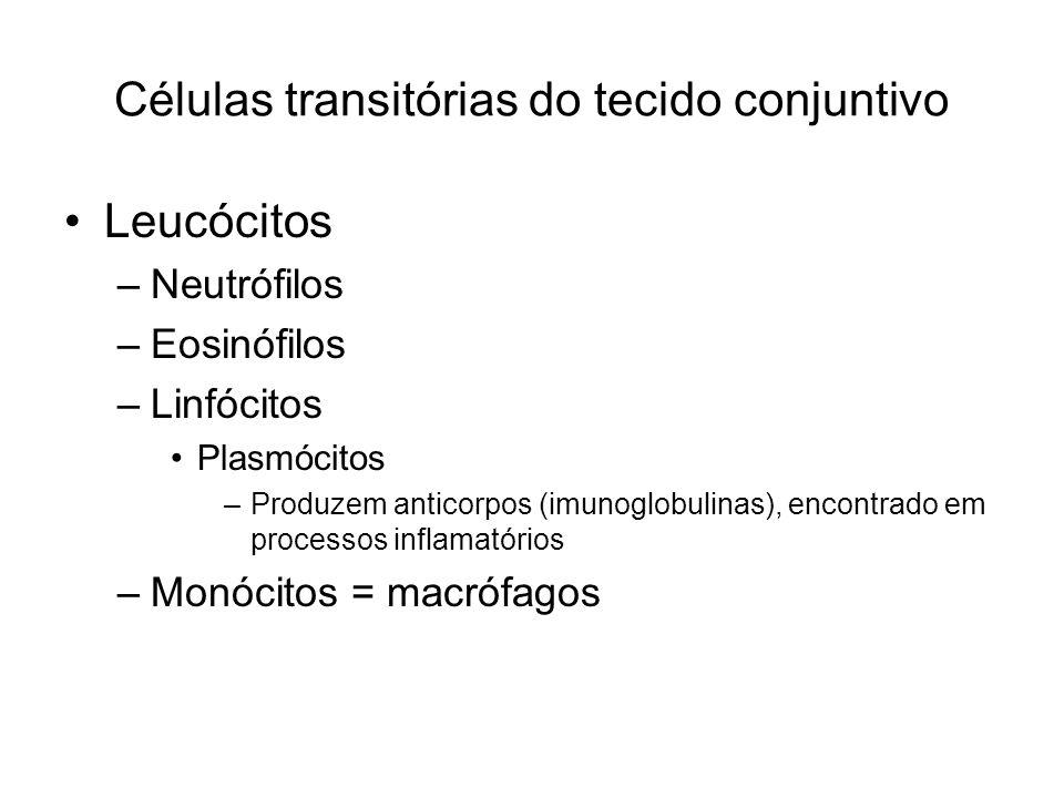 Células transitórias do tecido conjuntivo