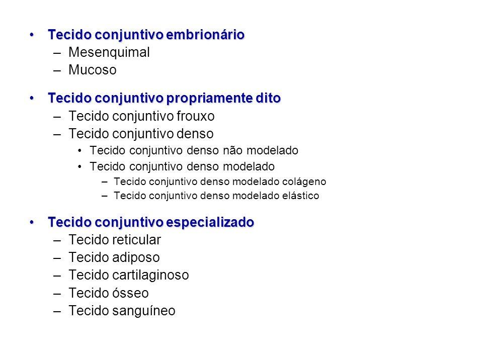 Tecido conjuntivo embrionário Mesenquimal Mucoso