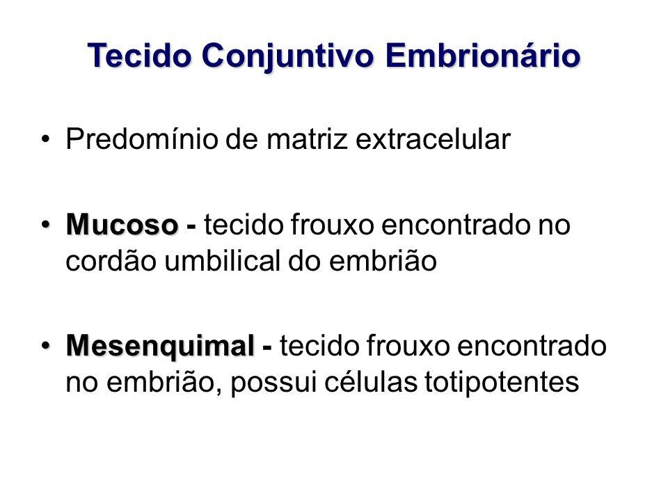 Tecido Conjuntivo Embrionário