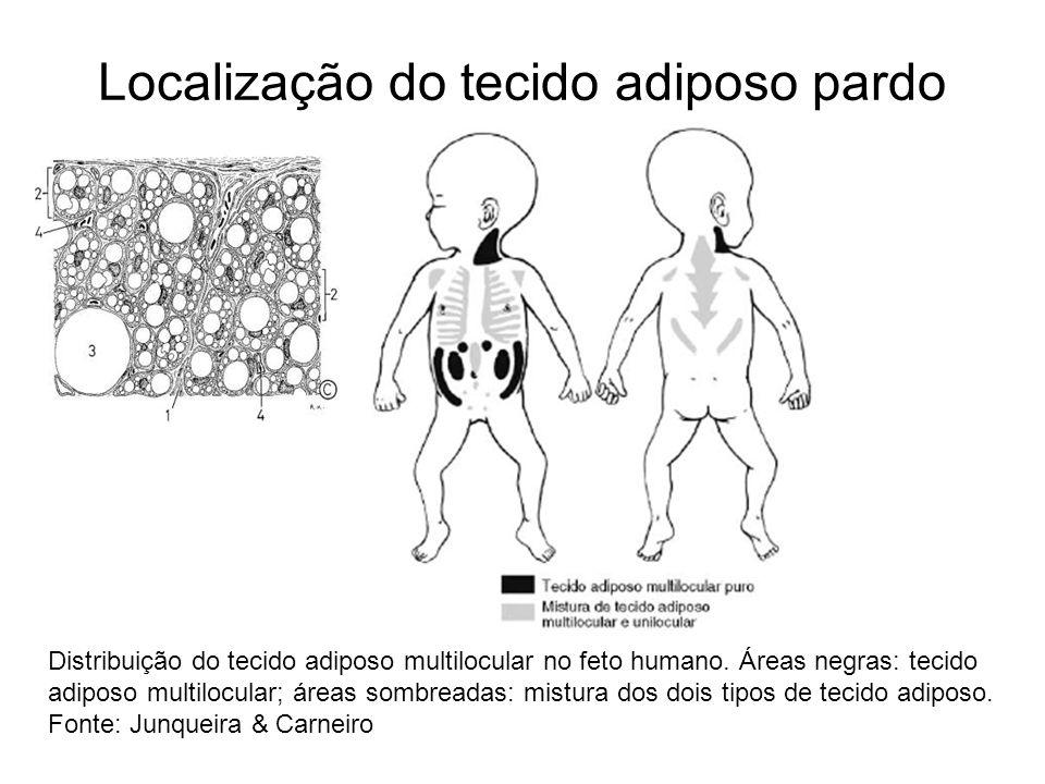 Localização do tecido adiposo pardo