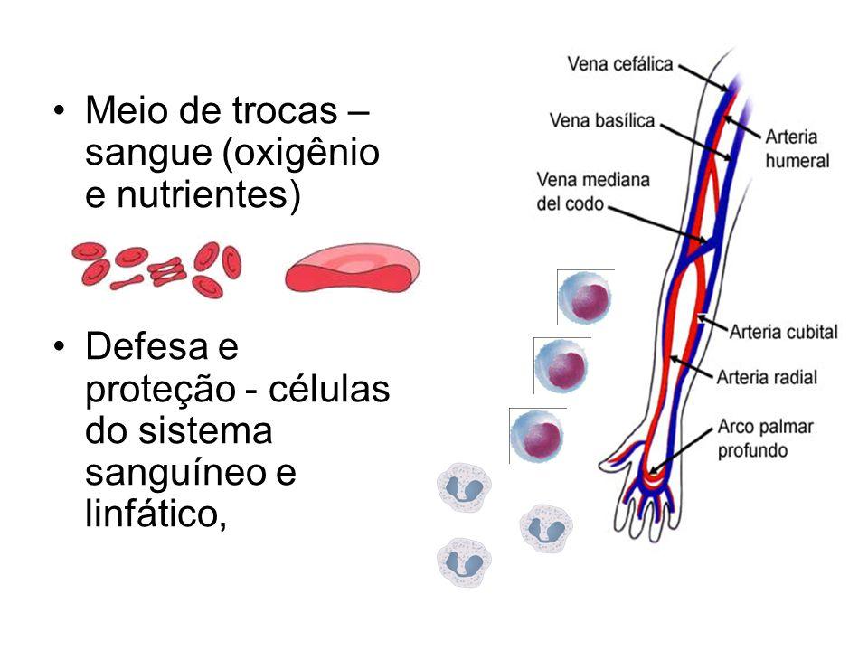 Meio de trocas – sangue (oxigênio e nutrientes)