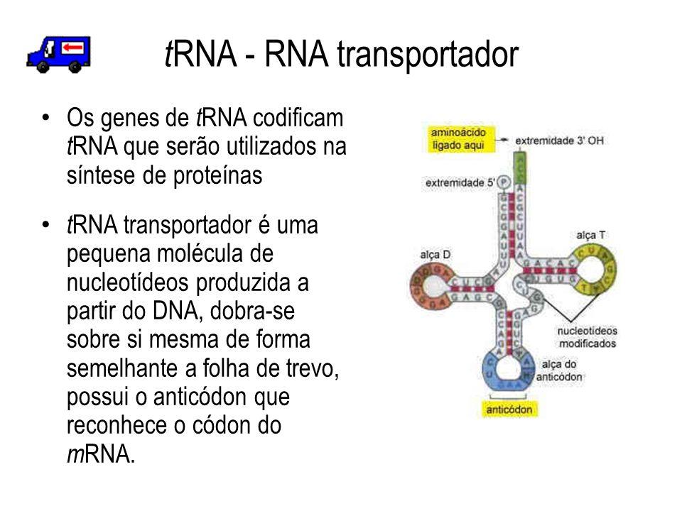 tRNA - RNA transportador