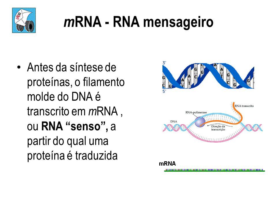 mRNA - RNA mensageiro