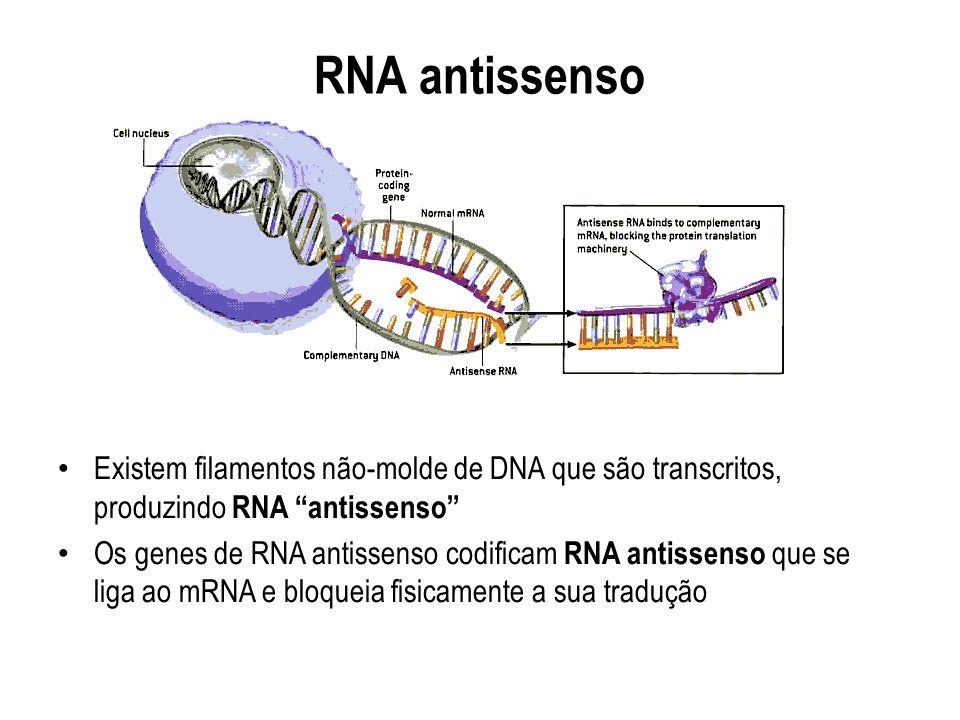 RNA antissenso Existem filamentos não-molde de DNA que são transcritos, produzindo RNA antissenso