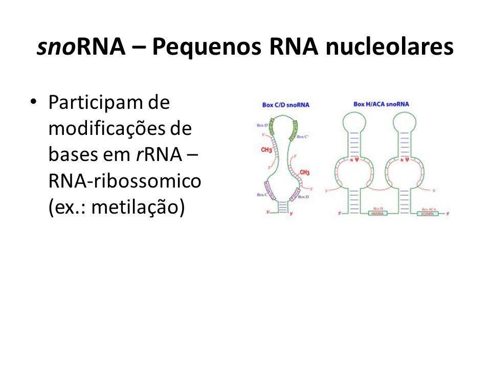 snoRNA – Pequenos RNA nucleolares