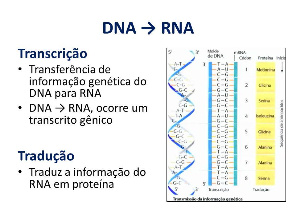 DNA → RNA Transcrição Tradução