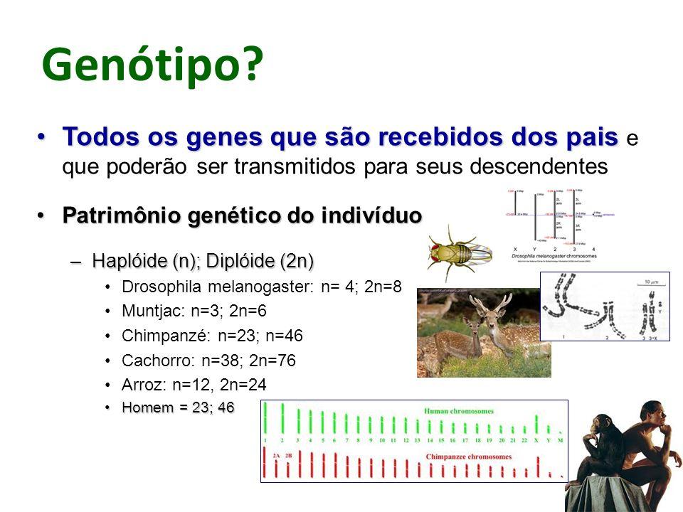 Genótipo Todos os genes que são recebidos dos pais e que poderão ser transmitidos para seus descendentes.